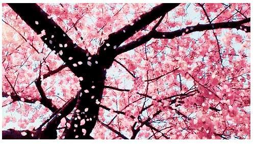 [春光静晓面胜桃花[上海美莱瑞蓝玻尿酸超值优惠进行时