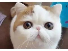 美莱自体软骨隆鼻有哪些类型