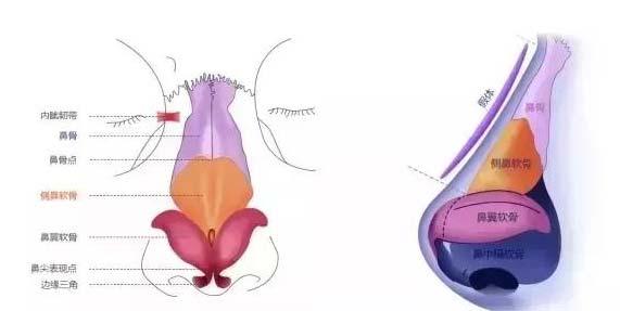 美莱李保锴科普:假体隆鼻与综合隆鼻有区别吗