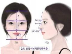 上海做鼻头缩小术需要多少钱