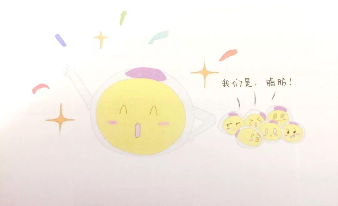 上海美莱小课堂|教您初识脂肪