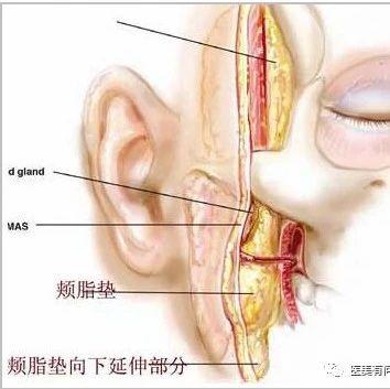 去颊脂垫手术上海哪里做的好