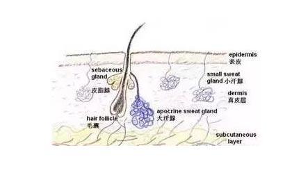 美莱科普丨毛孔粗大引发的问题是如何形成的