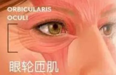 肿眼泡适合做多宽的双眼皮